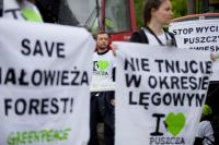Hope for the Białowieża forest