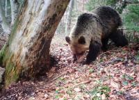 Romania bans trophy hunting of bears, wolves and wildcats