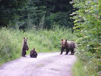 The Tatras bears can no longer raid the waste bins