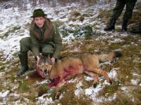 Wolf hunting in Slovakia