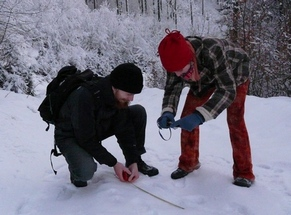 Volunteers documenting lynx footprints