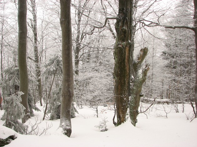 Javorníky forests